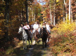 Horseback Riding Lessons in NJ